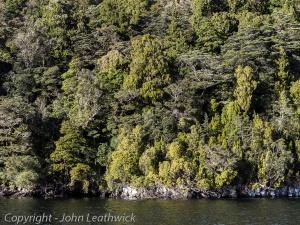 Coastal forest Long Island, Dusky Sound, Fiordland