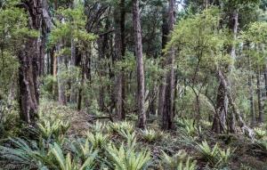 Stewart Island forest